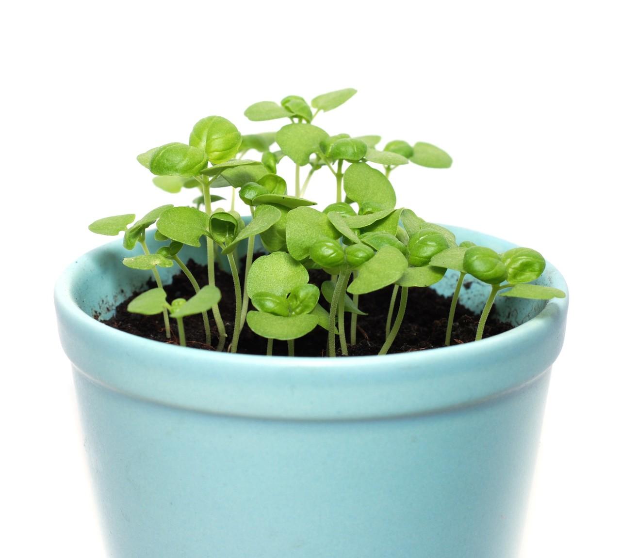 Historia roślin doniczkowych