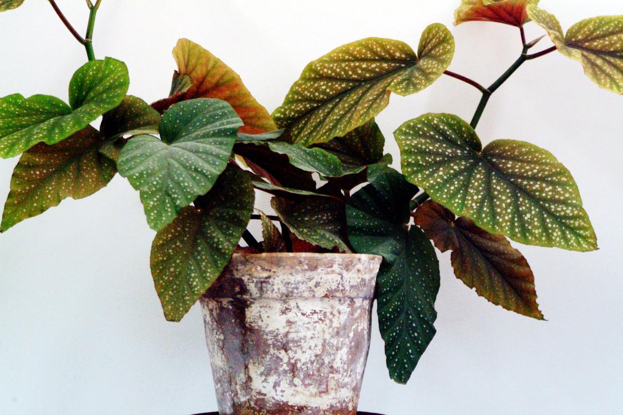 Niewymagające rośliny doniczkowe