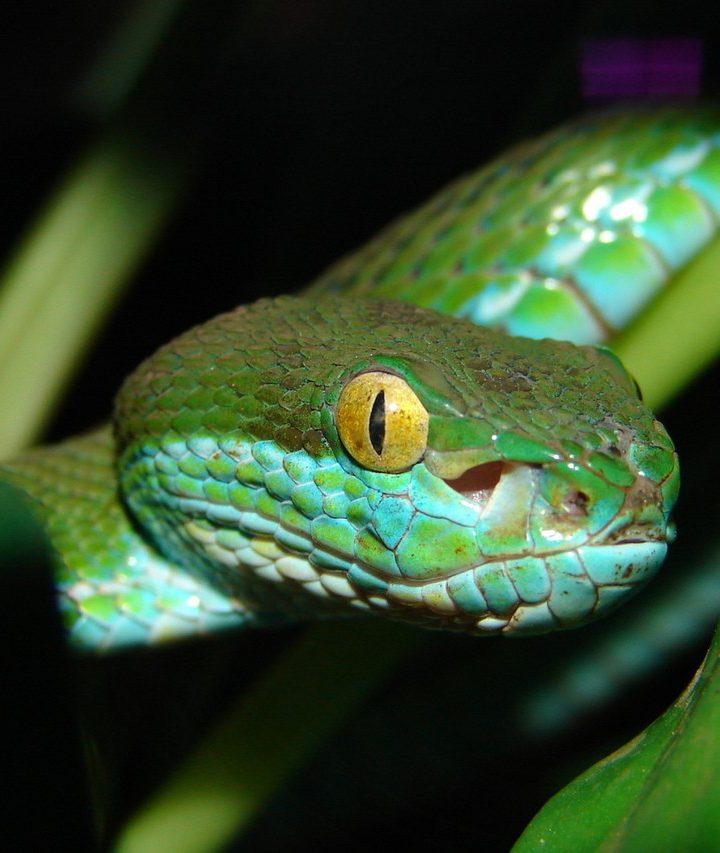 Tropikalne lasy Amazonii